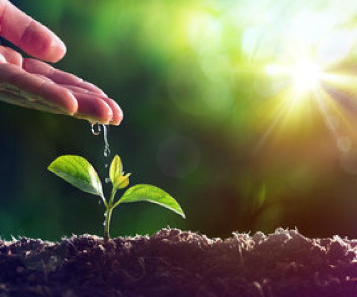 jardineria y riegos, mantenimiento de jardines, jardinero
